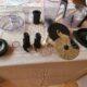 ACCESSOIRES ROBOT PHILIPS HR 7774